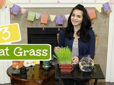 DIY- How to grow cheap and healthy | CAT GRASS | Honey