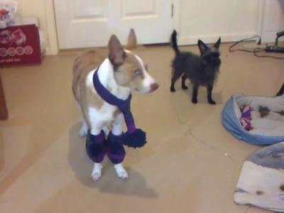 DIY Dog Scarf and Leg Warmers
