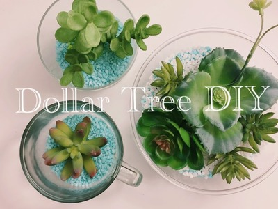 DIY Dollar Tree Succulents Terrariums  - Simple & Easy Only $11