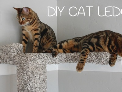 DIY Cat Ledge