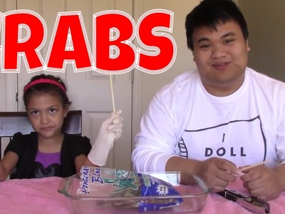 DIY How to Cook CRAB:  ION Doll Anatomy!