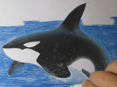 How to Draw a Killer Whale Easy with Charcoal and Pastels Step by Step
