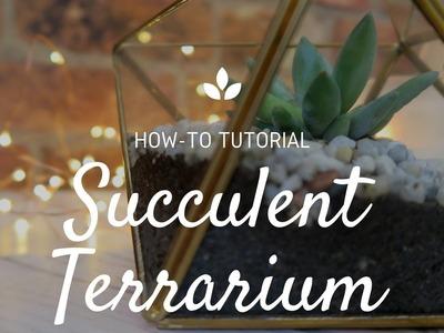 How To Make A Succulent Terrarium | DIY Tutorial