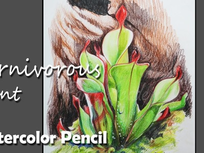 How to Draw a carnivorous plant in Watercolor Pencil
