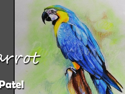 How to Paint A Parrot in Oil Pastel