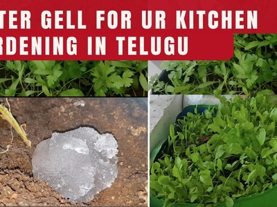 Water gel for Kitchen Gardening in Telugu| how to use water gel or hyrdogel for gardening