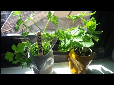 How to Make an Indoor Herb Garden from Cola Can [ Cara membuat Indoor garden dari kaleng]