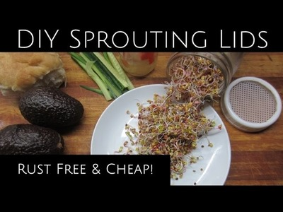 Sprouting, Microgreens, & DIY Rust Free Lids for Pennies