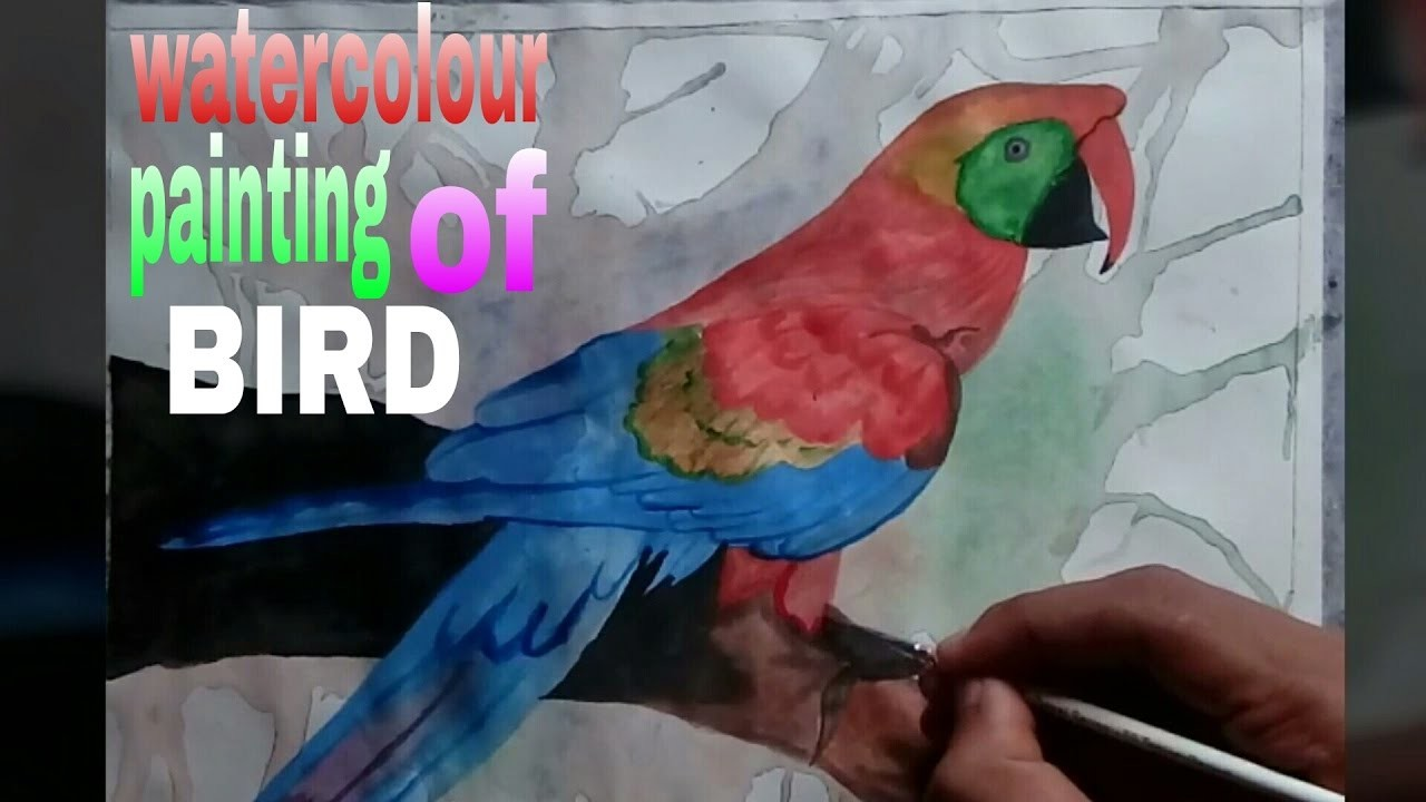 Bird How To Draw Watercolor Painting Of Colourful Birdstep By Step Parrot Origamiorigami Macaw Parrotorigami Diagram Steptime Lapse