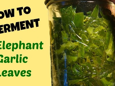 Ferment Elephant Garlic Leaves: How to Make and Use