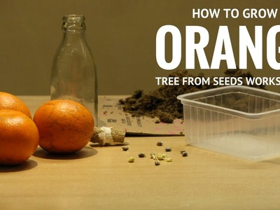 How to Grow Orange Tree from Seeds, Bottle Germination Method, Work Always! 100% Success!!