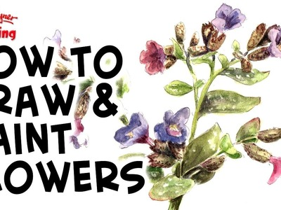 How to paint flowers in watercolor -  Pulmonaria - Soldiers and Sailors