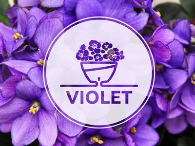 How To Plant African Violet in an innovative Self-Watering pot Calipso by Santino