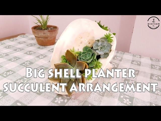 DIY: Mini Succulent Garden in a Seashell l Cactus and Succulent Garden Tour