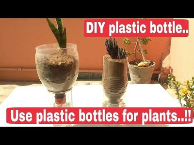 How to grow plant in plastic bottles, recycle plastic bottles, DIY plastic bottles