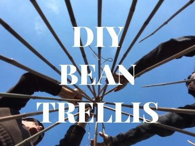 How to: create a bamboo cane wigwam. trellis for beans