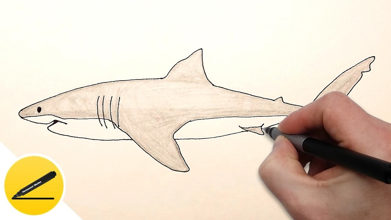 how to draw a tiger shark step by step easy