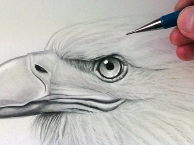 How to Draw an Eagle Head