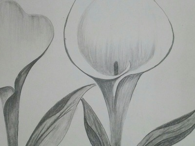 How to draw Calla lily