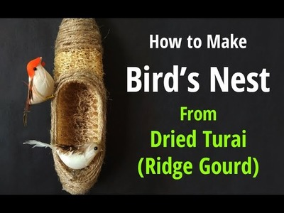 How to Make a Birds Nest Using Ridge Gourd | Bird Hanging Room Décor | Bird Nest Making