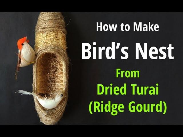 How to Make a Birds Nest Using Ridge Gourd | Bird Hanging Room Décor | Bird Nest Making