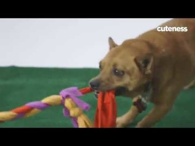 How To Make A Dog Toy Out Of Old T-Shirts