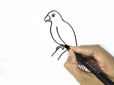 How to draw a parrot- in easy steps for children. beginners