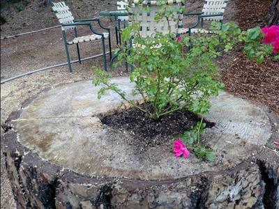How to Make a Tree Stump into a Planter Box