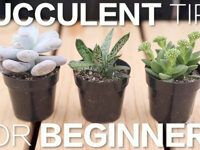 Succulent Tips for Beginners. Garden Answer
