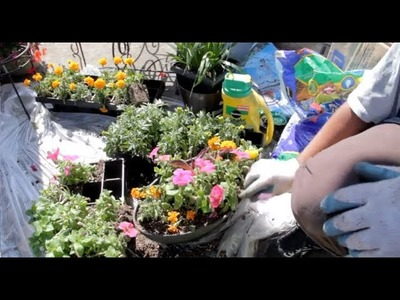 How to repot a plant 101 |  Grow Inexpensive Flowers