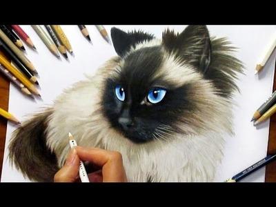 Drawing Subscribers' Pets #2 ❤ Zida, Ragdoll Cat from Holland - Speed Draw | Jasmina Susak