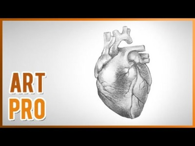 How to draw a realistic heart step by step