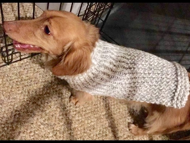 Thumb Hole Sweater