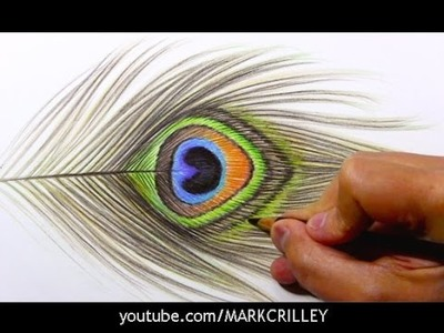 Drawing Time Lapse: Peacock Feather