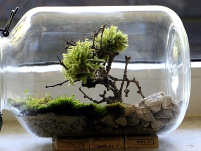 Homemade Bonsai Moss Tree Terrarium