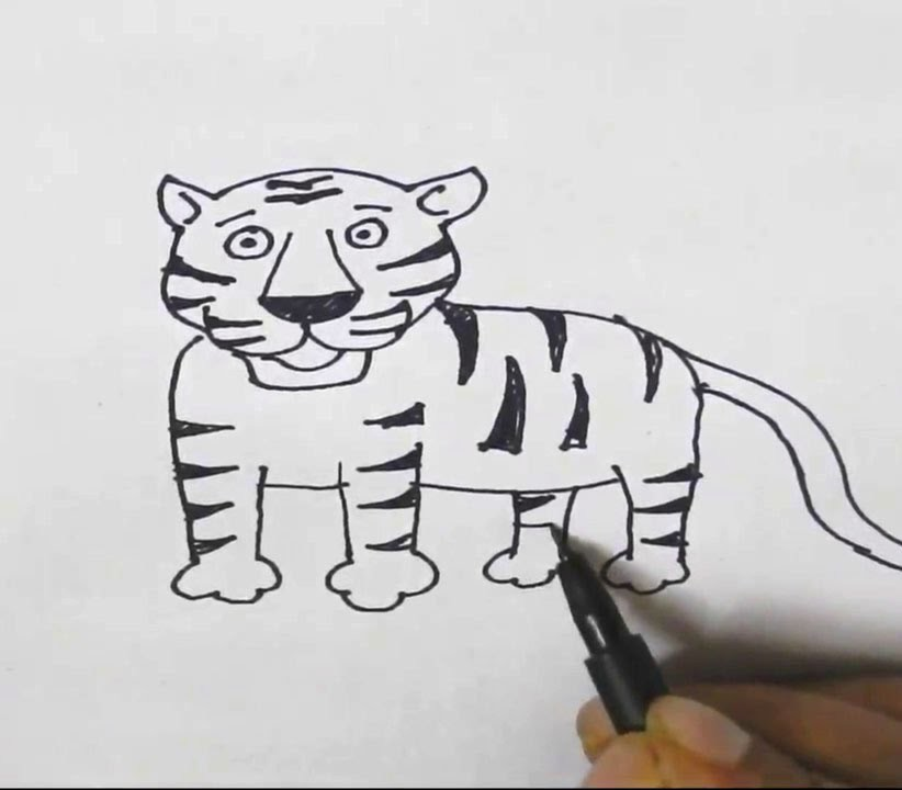 how to draw a tiger easy