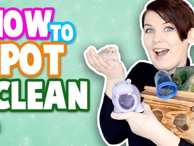 How To Spot Clean A Pet Cage