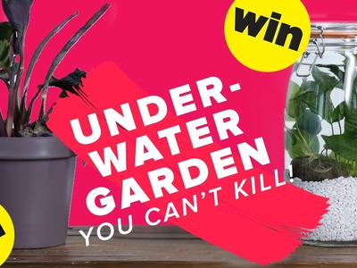 Underwater Garden You Can't Kill