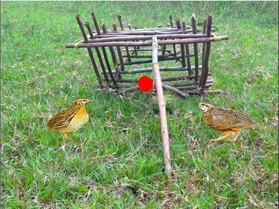 Amazing Quick Bird Trap in Cambodia - How To Make Easy Bird Trap Homemade in My Village