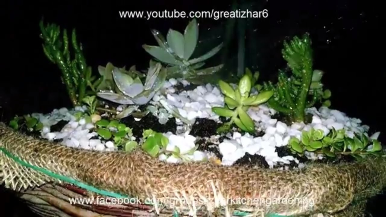 How to Make a Dish Garden Arrangement | Succulent Plants | Garden Ideas | Muft Ka Idea