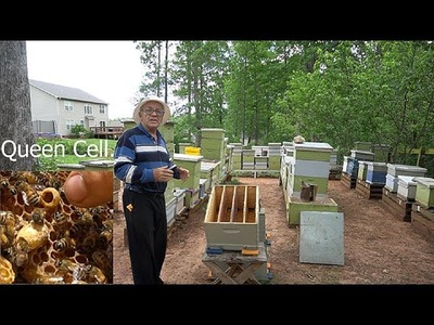 How to make a special multi Queen bee hive?  (English Version)
