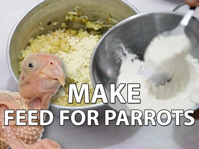 How to Make Healthy Feed for Baby Parrot at Home