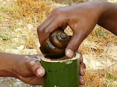 Wow! Young boys Catch N Cook Snails By Bamboo - How To Cook Snail By Bamboo - Village Food Factory