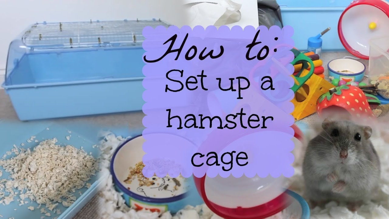 How to: SET UP A HAMSTER CAGE   Hamster HorsesandCats