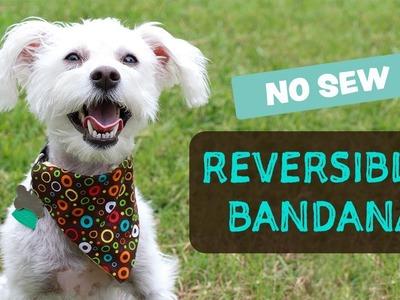 DIY-  Reversible Dog Bandana - No Sew  | Bandana de Perro