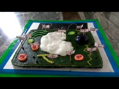 How to make plant cell ,model (Tutorial)