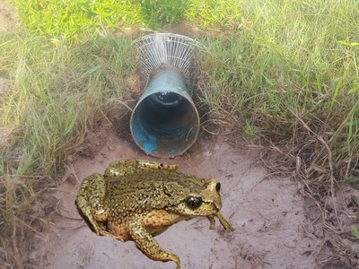 Toad Trap, How To Make Electric Fan Guard Toad Trap Easily