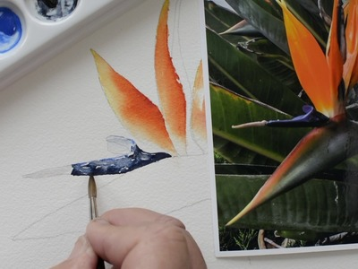 Bird of Paradise Part 5 Step by Step Watercolor Painting Instruction and Tutorial - Paint with Me!