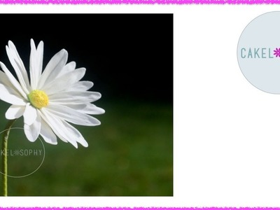 How to Make Sugar Daisy that Turns Heads