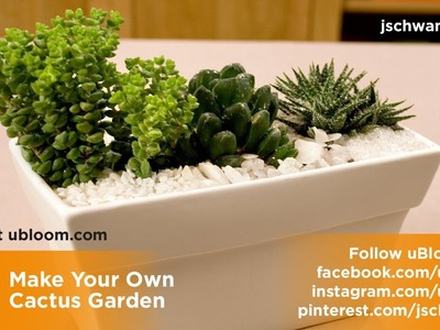 How to plant a Cactus Garden!